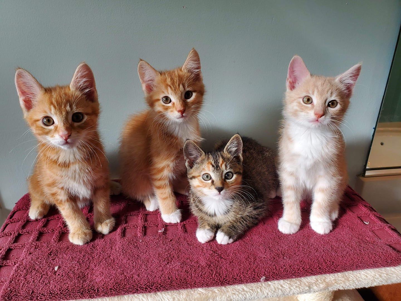 Cause 4 Paws - Kitten Cat Rescue and Adoptions in Locust Grove, Virginia
